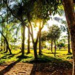 Chris Sharma Enters the trees